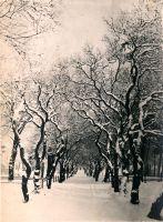 Greifenhagen._Fliedersteig_i.Winter
